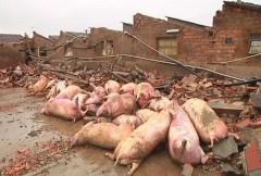Terremoto-in-Emilia-Romagna-colpiti-anche-gli-animali.jpg